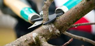 Why Tree Pruning Is Important?